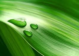 """ECN: """"Beter beleid en investeringsklimaat nodig voor bio-economie"""""""