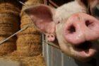 Landelijk vergelijkingsonderzoek dierenwelzijn supermarkten van start