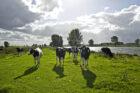 FrieslandCampina versnelt energie neutrale boerderijen met kleine windmolens