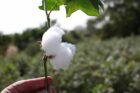 Global coalition set to make sustainable cotton the mainstream choice