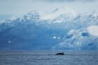 Nederlandse supertrawlers laten Noord- en Zuidpoolgebied met rust