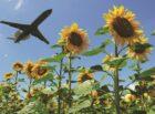 NHTV en ANVR winnen felbegeerde VN innovatie-award voor calculator CO2-vakantievoetafdruk
