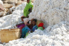 More companies to be assesed in second sustainable cotton ranking