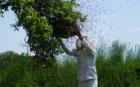 5 tips hoe je als onderneming in kan zetten op biodiversiteit