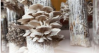 Sligro, GRO Mushrooms en Albron werken samen voor maximaal resultaat in duurzaamheid