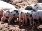 Nederlandse multinationals nog niet diervriendelijk genoeg