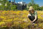 Booking.com gaat samenwerking aan met Rooftop Revolution om Amsterdamse hoteldaken groener te maken