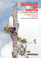 Global brands divided over transparency efforts to tackle deforestation for palm oil