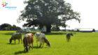FrieslandCampina ondersteunt leden-melkveehouders met programma Winnen met Klimaat & Natuur