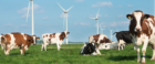 The Sustainable Dairy Partnership unites industry-wide push towards global sustainability