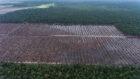 Greenpeace: palmolie-gebruikers Unilever, Nestlé en Mondelēz betrokken bij verwoesting van 130.000 hectare tropisch regenwoud