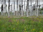 TenneT in actie voor biodiversiteit op al haar 462 hoogspanningsstations