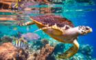 'EU-wetgeving is cruciaal in strijd tegen wereldwijde verwoesting natuur'