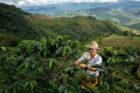 Nespresso lanceert programma om koffieoogst in bedreigde gebieden te herstellen