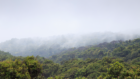 Nieuw rapport legt wereldwijd actieplan neer voor koolstofneutrale land- en bosbouwsector in 2040