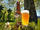 Bird Brewery lanceert 'goede doelen bier': voor ieder flesje plant de brouwerij één boom
