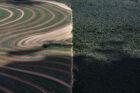 """Greenpeace: """"Bedrijven verwaarlozen belofte over ontbossing: 50 miljoen hectare verwoest"""""""