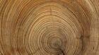 Nederlandse input gevraagd voor duurzame processen houtsector