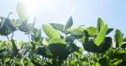 Koninklijke De Heus gaat in Europa voor duurzame soja