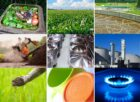 PBL-studie opmaat naar duurzaamheidskader biomassa