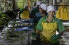PLUS maakt bananenketen transparant én introduceert eerste klimaatneutrale banaan