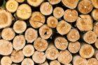 Europese subsidie voor Nederlands onderzoek naar toepassing lignineolie voor duurzame chemicaliën en materialen