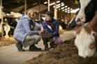 Arla-melkveehouders gebruiken big data om CO2-voetafdruk sneller te verlagen