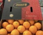 Jaguar The Fresh Company start met jaarrond fairtrade  'Clean Citrus' sinaasappels