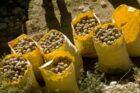 Nederlandse aardappelinnovatie is duurzamer en biedt wereldwijd kansen