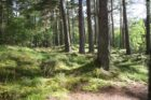VolkerWessels wijst drie klimaatbossen aan in strijd tegen klimaatverandering
