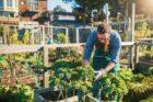 Duurzame kwekers uit sierteeltsector lanceren eigen bestel- en leverdienst in België