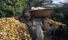 Er werken nog steeds meer dan 2 miljoen kinderen in de cacao-industrie