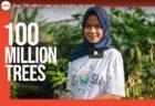 Zoekmachine Ecosia plant 100 miljoenste boom