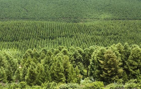 Webinar 'Maak sociale impact met je CO2-voetafdruk'