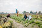 Lancering nieuwe beweging Aardpeer: landbouwgrond als sleutel inzetten voor de transitie naar natuurvriendelijke landbouw