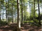 IKEA launches new 2030 forest agenda to push for improved forest management and biodiversity globally
