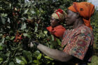 Winst supermarkten stijgt 123% tijdens pandemie maar arbeidsters in ketens uitgebuit