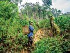 Dove en Conservation International kondigen bosherstelproject aan om de strijd tegen klimaatverandering te versnellen