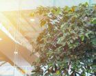 Cushman & Wakefield committeert zich aan ambitieuze klimaatdoelen met impact op gehele keten