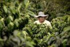 Fairtrade en Nespresso verzekeren samen 10.3 miljoen koffieplanten tegen klimaatverandering